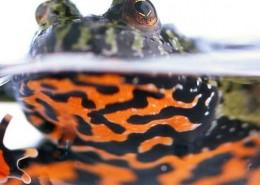 frog-in-pot-6-1112x423